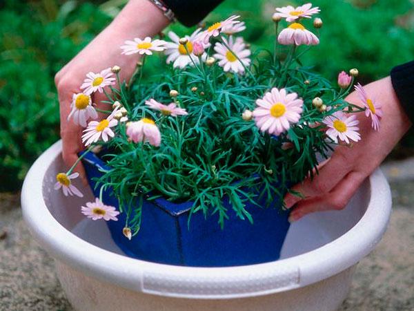 Как помочь растениям в жару в ваше отсутствие