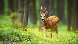 """Beautiful Relaxing Music, Peaceful Soothing Instrumental Music, """"Journey Through Nature""""  Tim Janis"""