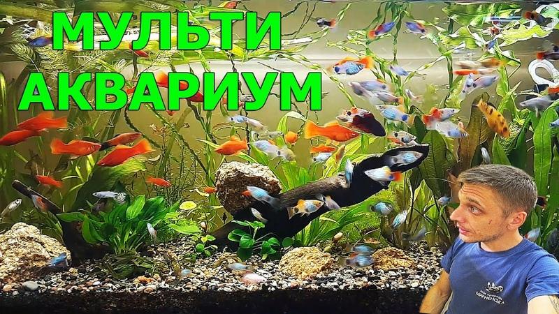 Мульти аквариум Беременная самка Посылка Разводня живородок