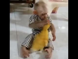 Обезьянка играет как ребёнок с утёнком