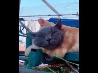 Я думала это один кот.