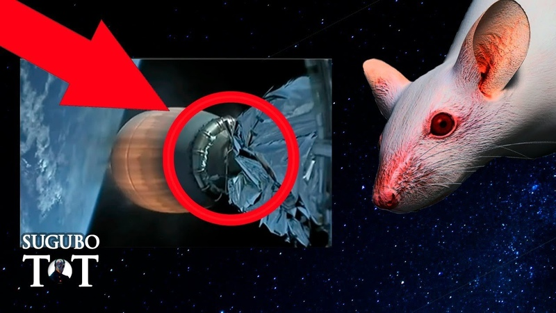 Мышь в Космосе доказательство обмана NASA или просто иллюзия