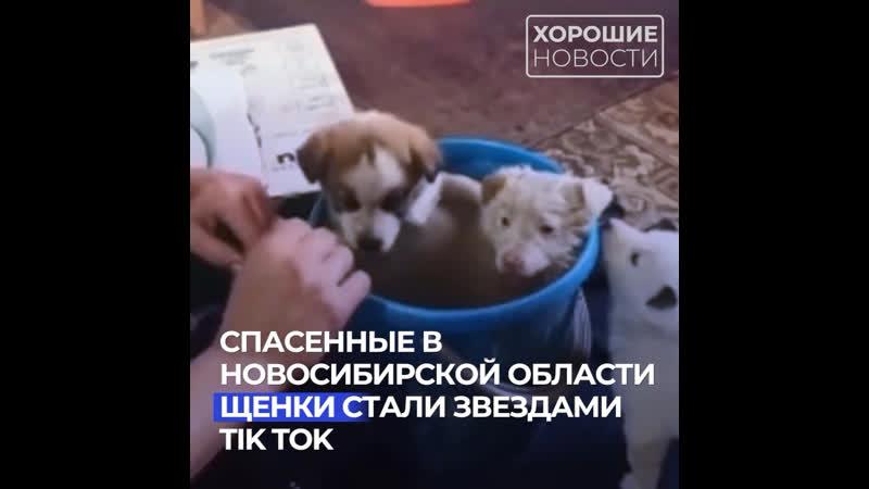 Спасенные в Новосибирской области щенки стали звездами TikTok