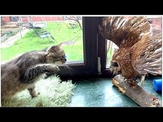 Filya's cat attacked Sonya's owl - a cat and an owl ! кот Филя напал на сову Соню - кот и сова !