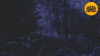 Атмосфера Ночи, Пение Сверчков для Расслабления перед Сном.
