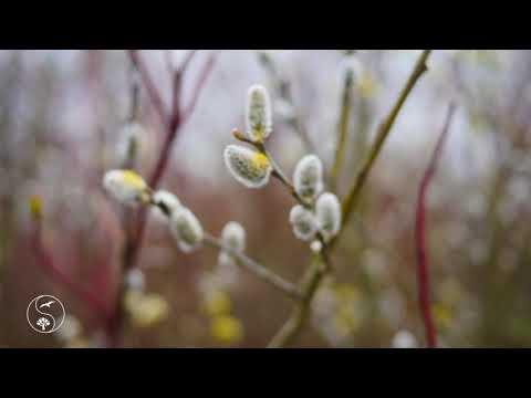 Нежная и Красивая Музыка для Релаксации и Сна Красивая Природа с Пением Птиц Весной