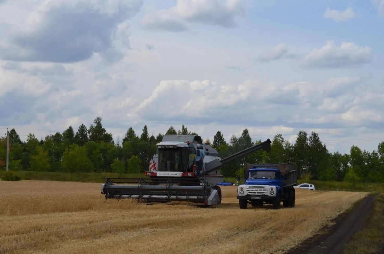 Хлеборобы Саратовской области собрали пять миллионов тонн зерна