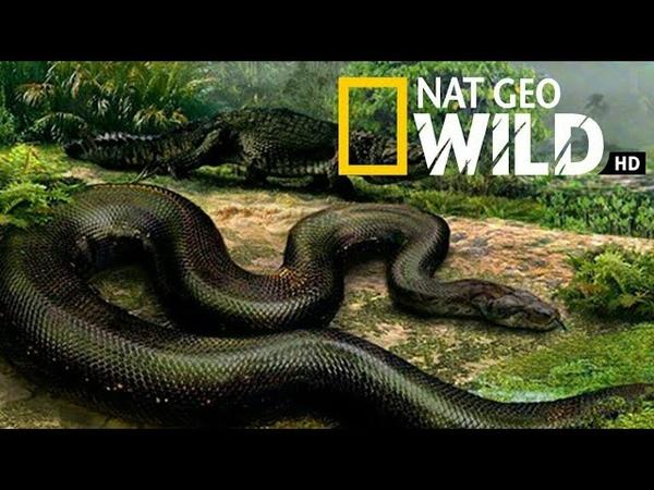 Nat Geo Wild Королевы гадюк