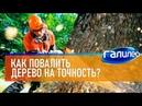 САМЫЙ ПЕРВЫЙ СЮЖЕТ Галилео 🌲 Как повалить дерево на точность