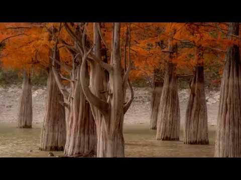 Болотные кипарисы озера Сукко