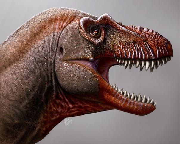 Новый вид тираннозавра получил название «Жнец смерти»