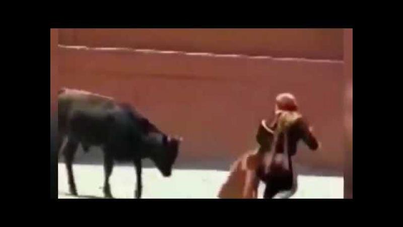 Diminutive female bullfighter is mounted by huge bull БЫК НАБРОСИЛСЯ НА ЧЕЛОВЕКА