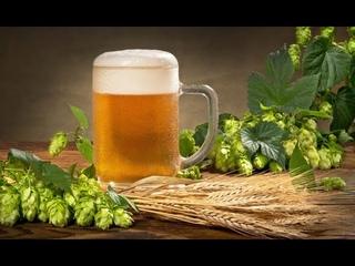 Хлебное пиво в домашних условиях. Себестоимость литра 15 рублей