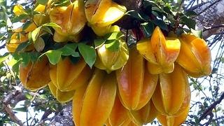 Карамбола - один из самых необычных фруктов