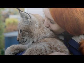 Питерская девушка приютила дома очень крупную кошечку
