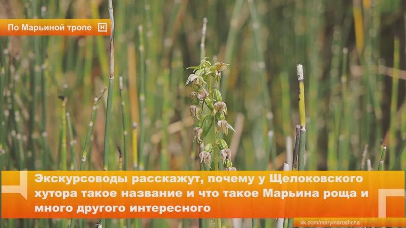 Экологическая тропа Марьина роща открылась в Архитектурно-этнографическом музее-заповеднике «Щелоковский хутор»
