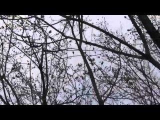 Российский истребитель поприветствовал митингующих в Луганске!