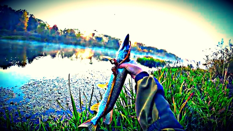 Я этот Осенний Жор Щуки 2020 коряги шатал   Рыбалка на Спиннинг