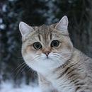 Фотоальбом Айана Саввинова