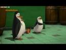 Пингвины 3x38