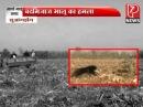 Bear attacked man Bhago Bhalu aaya