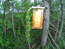 Ловушки для пчел. Способы установки ч.1