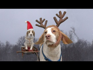 Dogs Ruin Christmas:  Cute Dog Maymo & Puppy Penny