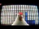 El tecno de la gallina, tecno chicken