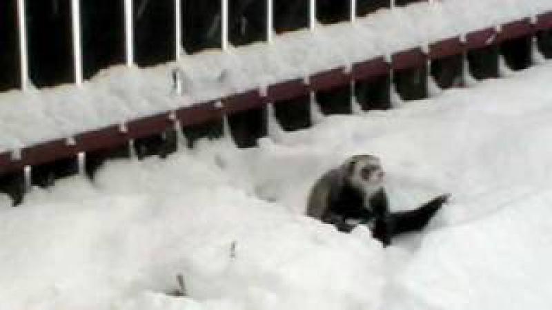 Fretka Fredy v snehu