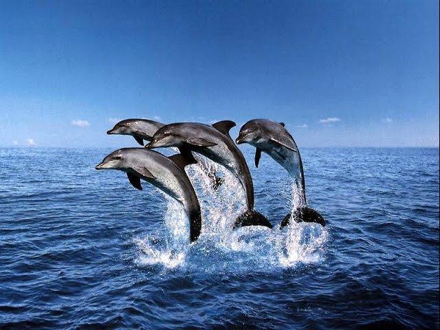 АВАТАР 2015 О чем нам поют дельфины. Тело Света. Интересно