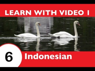 Learn Indonesian with Video - This Indonesian Lesson Is NOT Just for the Birds!!