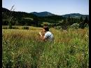 DDT - На небе вороны (Block flute (recorder) melody in Carpathian mountains)
