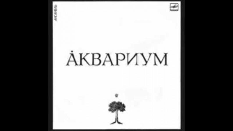 Аквариум Иван Бодхидхарма