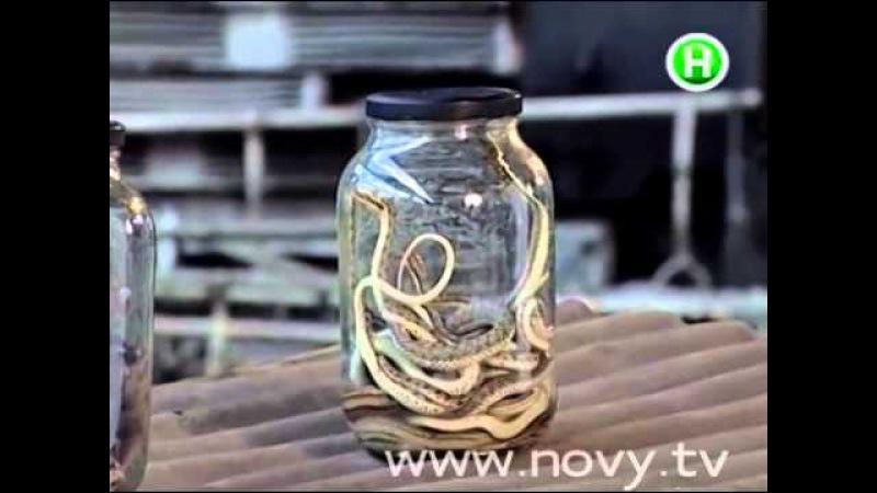 Фактор страха Испытание пауками крысами и змеями Выпуск 01 11 2003