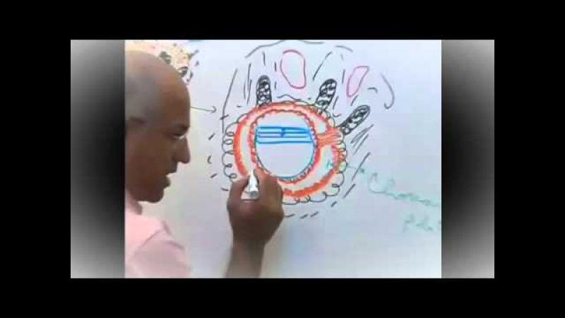 Dr Najeeb Video Lectures Embryology Development of Placenta 1 » Freewka.com - Смотреть онлайн в хорощем качестве