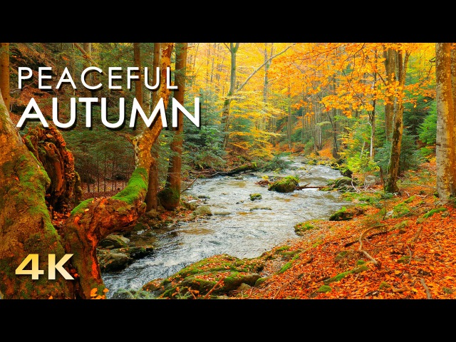 4K Autumn Forest - Relaxing Nature Video River Sounds - NO MUSIC - 1 hour Ultra HD 2160p