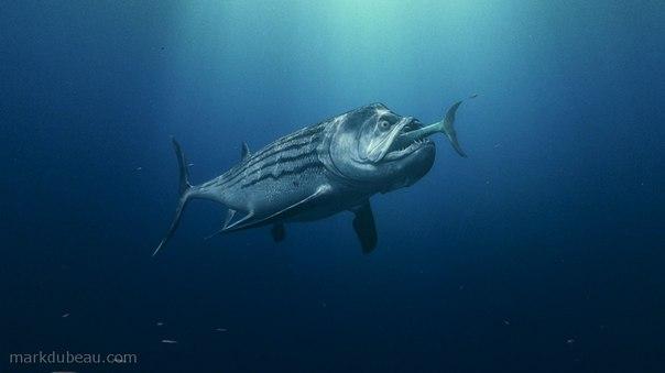 xiphactinus fish - 1280×720