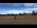 Kite flying fail