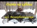 Охота на кабана в хозяйстве Великобагачанское Полтавская обл.