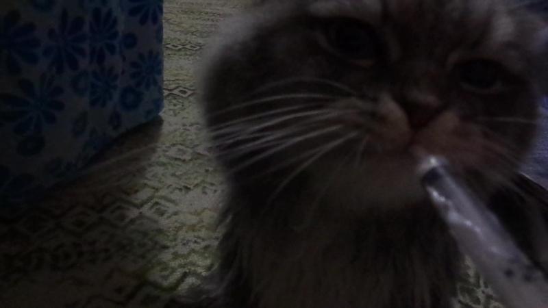 Филька любит кушать фосфалюгель))