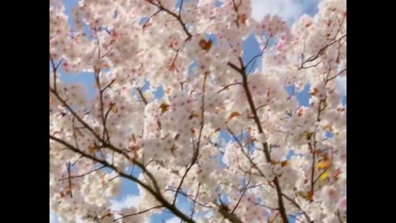 Инга Кузьгова о красоте весны Родной язык ты бесконечно красноречив