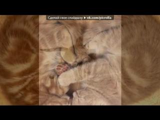 «кисы» под музыку я кошка, кошка, кошка знакомы мы немножко ))). picrolla