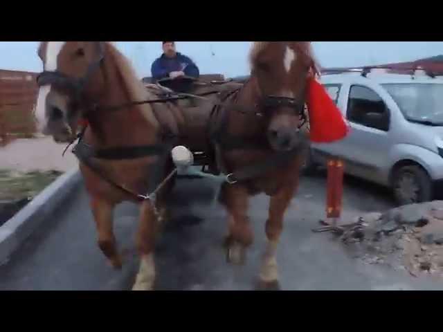 Caii lui Gligor din Floresti