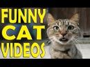 Приколы Про Кошек Самые Смешные 2017 ★ Смешные Кошки и Коты До Слез.