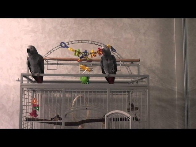 Говорящий попугай Григорий 3 сезон 9 серия