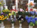 Экзотические цветы в магазинах FloraОПТ