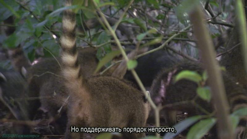 BBC Жизнь 03 Млекопитающие Познавательный природа животные 2009