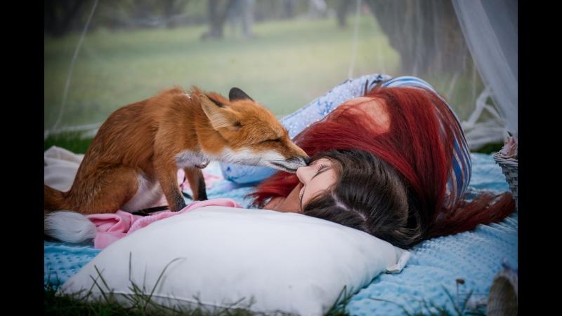 Картинки больной лисы