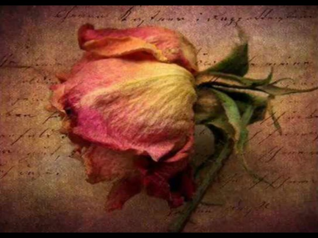 Mina Mazzini ~ Mi mandi rose