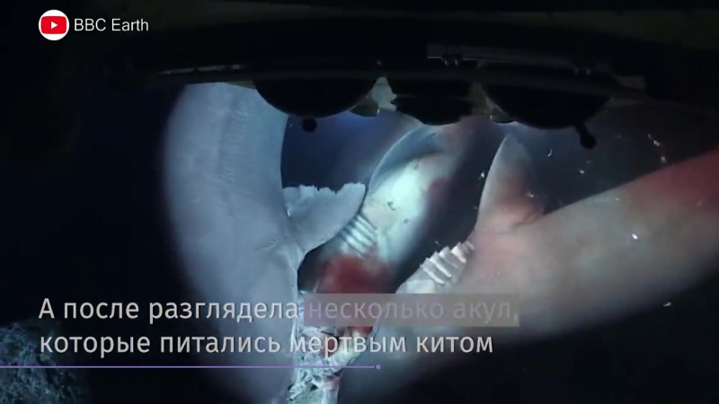 Акулы атаковали съемочную группу BBC Голубая планета 2